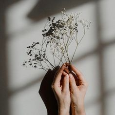 For those who dare to hope. Bon Weekend, Champs, Sustainable Fashion, Harry Styles, Dandelion, Artwork, Flowers, Beautiful, Paradis
