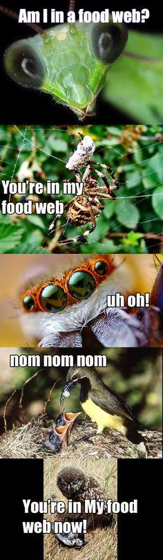 food web fun