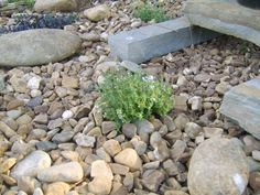 low maintenance landscaping ideas - Google Search