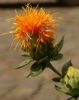Safflower-comes in orange and yellow.