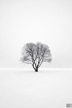 Lonely tree. by Dmitry Doronin, via 500px