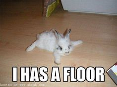 Bunny i has a floor! hahahaha