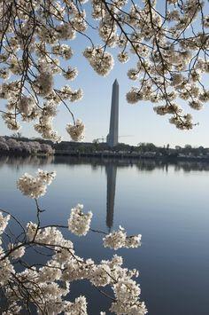Washington Photo Safari (Washington DC): Top Tips Before You Go - TripAdvisor
