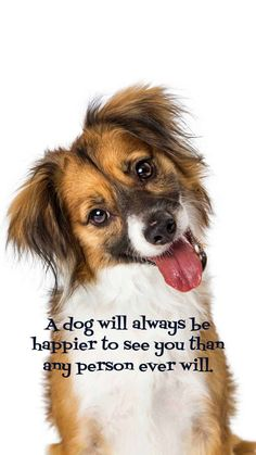 20 free dog wallpapers i phone and Android. 20 HD Sized homescreen wallpaper Dog Pictures.