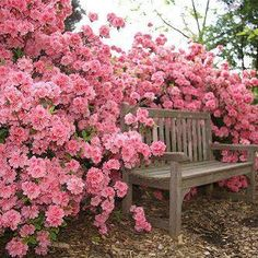 Landscape Ideas: pink roses behind a simple garden bence