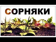 Сорняки.Кулинарный эксперимент. Можно ли культурные растения в блюдах заменить сорняками?