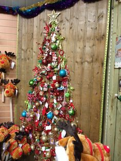 Xmas tree idea - Henry street garden centre