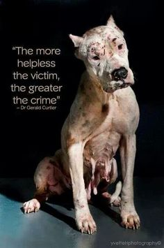 This means that an animal abuse crime would be the worst