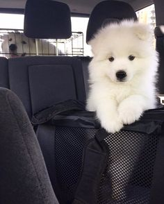 From: @lea_maya_samoyed #dogs_of_world and follow us to be featured