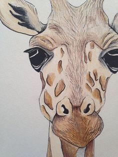 giraffe face drawing using pencil and ink. Original piece on 185 gsm watercolour paper Giraffe Drawing, Giraffe Art, Watercolor Paintings Of Animals, Watercolor Art, Animal Drawings, Art Drawings, Giraffe Pictures, Elephant Face, Arte Pop