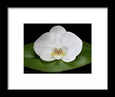 Flower Frame, Hanging Wire, Clear Acrylic, Fine Art America, Orchids, Design Inspiration, Framed Prints, Artwork, Flowers