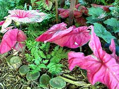 Spring-spiration! Garden colors: Colorful Garden, Hgtv, Landscaping, Spring, Colors, Plants, Yard Landscaping, Colour, Plant
