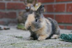 All sizes | Little Bunnies | Flickr - Photo Sharing!