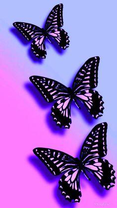Mariposa sigueme