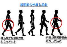 あなたはどっち?ふくらはぎが太い人の2パターン。 アニメーション制作用の歩行の動画です。 これだけよく大股で歩けるものだと感心します。アニメーションを書く人のためですが動きがよくわかりますね。普通時の歩行とは違いますが参考になります。 何を見てもらいたいのかというと 後ろ脚です。それも股関節のところ。 股関節の伸展と屈曲 後ろ脚になるほうの股関節は本来このように伸展させ、足裏で蹴りだして前に進みます。  ふくらはぎが太い人 その①