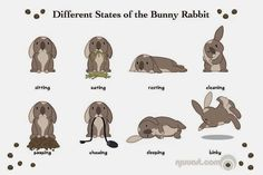 Different states of bunnies ^^
