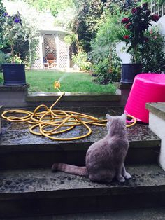 Ted fears the great yellow water snake.