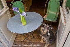 Olivia te cuida: Desayunos, brunches y comidas caseras. Local pequeñito y adictivo. Son encantadores, a la par que perrunos.