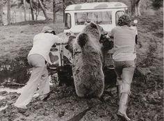 Sympa l'ours...