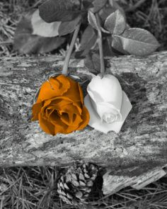 Black and White Orange Rose Wall Art Home Decor Pictures Options   eBay