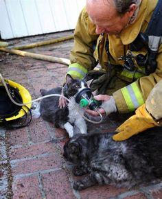 First responders save lives. #EmergencyResponders #Pets