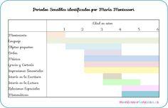 Periodos Sensibles - Sensitive Periods • Montessori en Casa