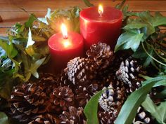 Mini pinecones (Scotch Pine) make perfect Christmas decorations, window display decor, wreath adornments, woodland potpourri additions and much more.