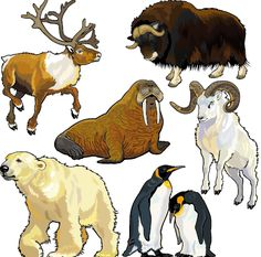 Vector set of wild animals design graphic 07 free