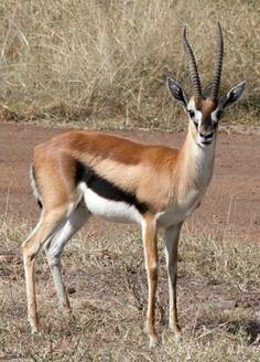 Lucie en gazelle