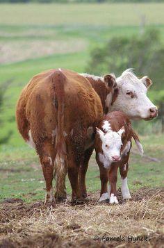 foto del día: madre e hijo!