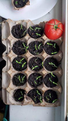 Eco Garden, Edible Garden, Garden Plants, House Plants Decor, Plant Decor, Growing Plants, Growing Vegetables, Hanging Plants, Indoor Plants