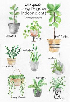 a guide to caring for easy to grow indoor plants