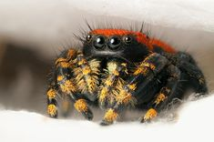 Spider facts and information for children | Spiders for kids ...