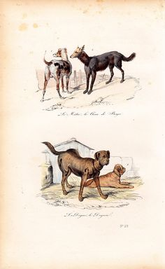 1870 Antique Victorian DOG engraving By by TwoCatsAntiquePrints