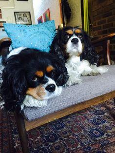 #dog #dog #puppy #pup #cute #pet #pets #photooftheday #dogoftheday