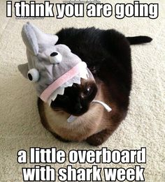Shark Week to a cat's perspective. Children's Dental Health Center | #Stoughton | #MA | www.childrensdentalhealth.net