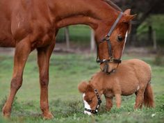 best images, pictures and photos about baby horses in farm - how long do horses live