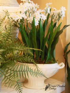 If your missing the lid to a soup tureen, they make beautiful flower arrangement containers! Beautiful Flower Arrangements, Beautiful Flowers, Bluebird Vintage, Blue Bird, Bobs, Planting, Indoor Plants, Orchids, Garden Ideas
