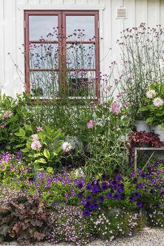 Hemma hos Karolina Brising och Anders Hörnell i Dalby Cottage Garden Design, Cottage Garden Plants, Back Gardens, Outdoor Gardens, My Secret Garden, Dream Garden, Garden Planning, Backyard Landscaping, Landscaping Ideas