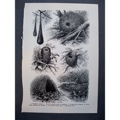 nests illustrations