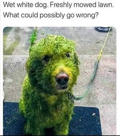 Funny Animal Memes, Dog Memes, Funny Dogs, Funny Animals, Cute Animals, Funny Memes, Animal Funnies, Jokes, Cute Puppies