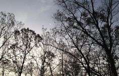 Picture of the morning sky and trees at Hocking Hills Farm