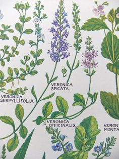 Vintage Botanical Drawings #PeonyandThistlePaper #etsy