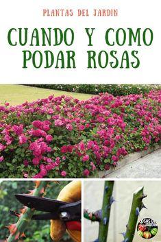Movie Tutorial and Ideas Veg Garden, Garden Plants, House Plants, Organic Gardening, Gardening Tips, Green Life, Dream Garden, Photography Tutorials, Beautiful Gardens