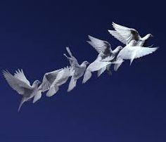 Image result for white dove