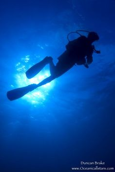 "Old Bahama Bay Blog - Diving for ""Treasures"" in the Bahamas"