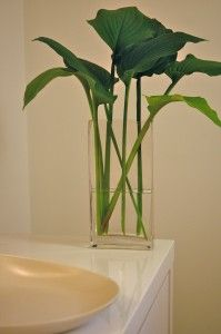 Hosta- I never would have thought to put it in a vase like that!