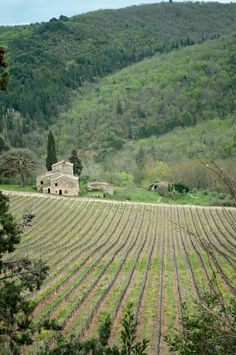 A visit to Italy's Chianti Wine region to discover the wineries and vineyards of Tuscany.