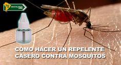 Truco casero para tus viajes mochileros a lugares con mosquitos: Cómo hacer un repelente contra mosquitos con solo tres ingredientes.