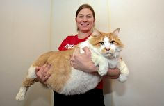 Garfield, the 40lb feline, has claimed the dubious title of world's fattest cat. The obese cat was brought into the shelter after his owner sadly passed away. :(